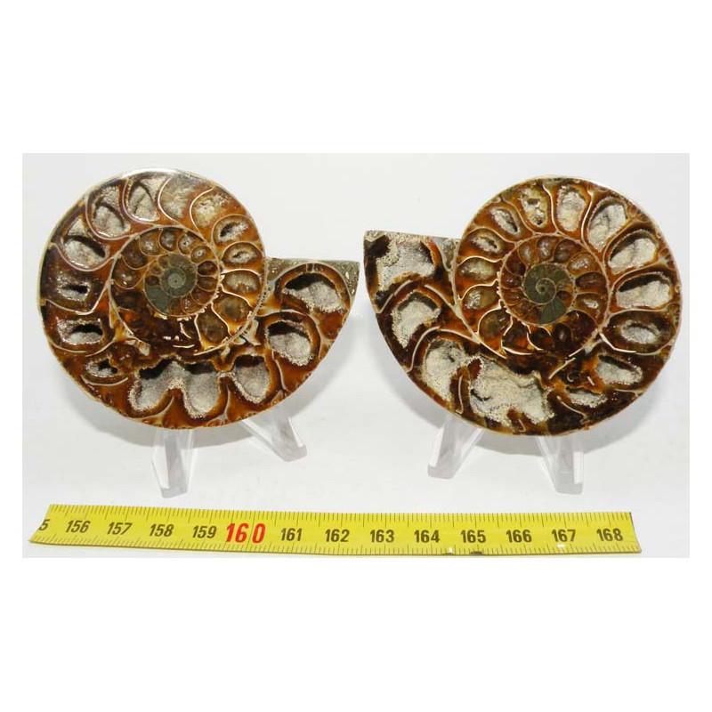 Ammonite de Madagascar Sciée et polie  ( 165 grammes - 021 )