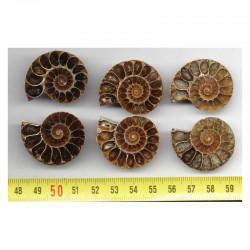 lot de 3 Ammonites de Madagascar Sciées et polies ( 009 )