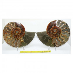 Ammonite de Madagascar Sciée et polie ( 580 grammes - 015 )