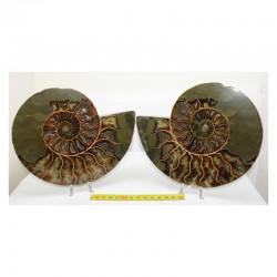 Ammonite de Madagascar Sciée et polie ( 1300 grammes - 017 )