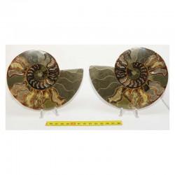 Ammonite de Madagascar Sciée et polie  ( 598 grammes - 023 )