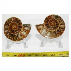 Ammonite de Madagascar Sciée et polie  ( 70 grammes - 034 )