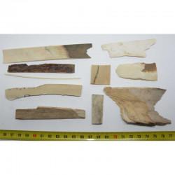 Morceaux de defence Mammouth laineux ( 50 grs - 004  )