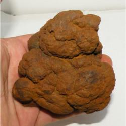 Coprolithe de Dinosaure (  USA - Washington - 017 )