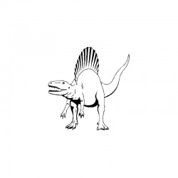dent dinosaure Spinosaurus Aegypticus ( 10 cms - 154 )