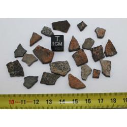 Coquilles fossile d'oiseau...