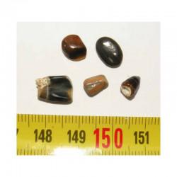 lot de 5 dents fossiles de sargue ( Faluns - 003 )