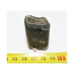 1 dent de Megatherium prehistorique ( 003 )