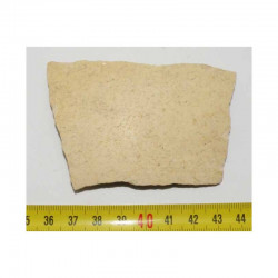 Fragment de coquille d oeuf fossile d Aepyornis ( 010)