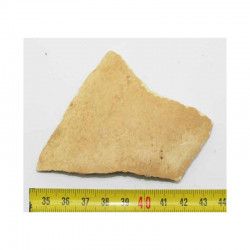 Fragment de coquille d oeuf fossile d Aepyornis ( 005)