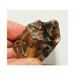 Dent de renne ou chevreuil prehistorique ( 004 )