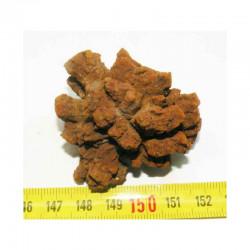 Coprolithe de reptile ( Chine - 001 )
