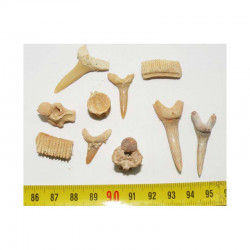 lot de 10 fossiles du Maroc ( 004 )