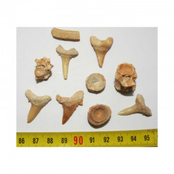 lot de 10 fossiles du Maroc ( 005 )