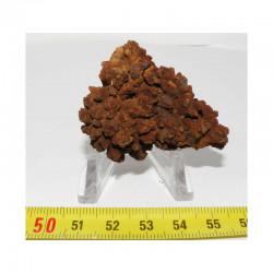 Coprolithe de reptile ( Chine - 004 )