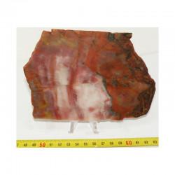 tranche de Bois Fossile ( USA - 015 )