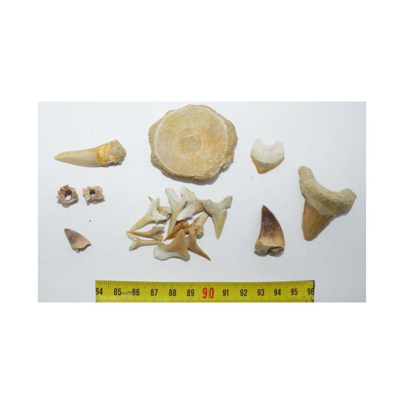 lot de fossiles du Maroc pour commencer sa collection ( 021 )