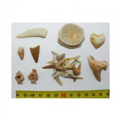 lot de fossiles du Maroc pour commencer sa collection ( 022 )