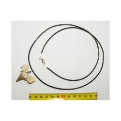 Collier pendentif  dent de requin fossile ( Lamna - 008 )