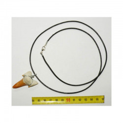 Collier pendentif  dent de requin fossile ( 005 )