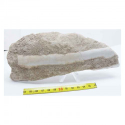 machoire de Mosasaurus beaugei ( dinosaure -118 )