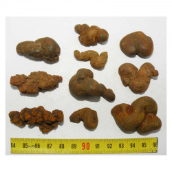 Lot de 10 Coprolithes de Dinosaure (  USA - Washington - 009 )
