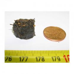 Meteorites Nantan Chine ( IIICD - 7.60 grs - 008 )